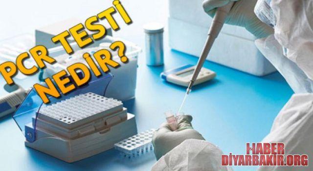 PCR Testi Nedir